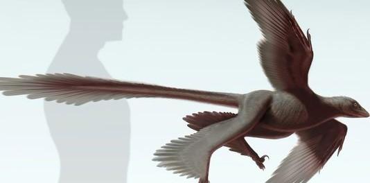 (Photo: Stephanie Abramowicz, Dinosaur Institute, NHM)